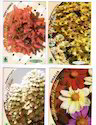 Exclusive Flower Seed Packets