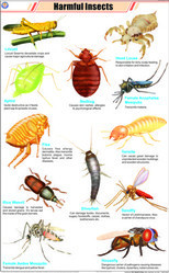 Harmful Insects For Zoology Chart