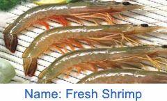 Fresh Shrimp Fish