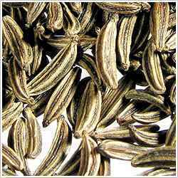 Caraway Oil