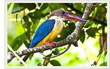 Kumarakom Bird Sanctuary Tour