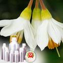 Benzoin Oils