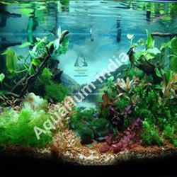 Tetras Aquarium