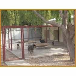 Hostel Facility For Dogs & Cats