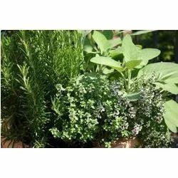 Medicinal+Plants