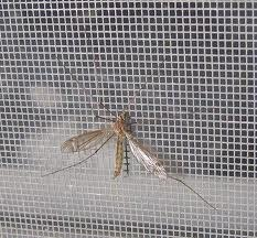 Mosquito Screen Netting
