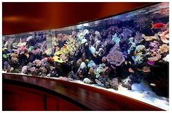 large aquarium tanks