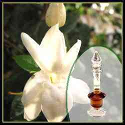 Kacha Mogra Fragrance