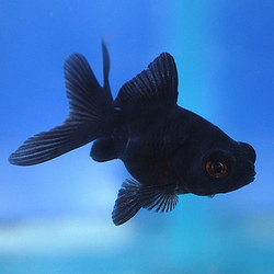 Aquarium Fishes Products, Aquarium Tanks, Aquarium Plants, Aquarium