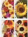 Flower Seed Packets for Agriculture Purpose