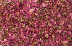 Dry Rose And Petals