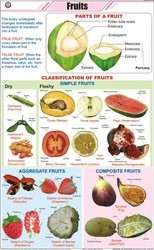 Fruits For Botany Chart