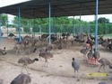 EMU Farmings