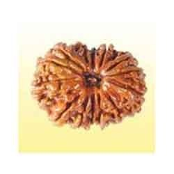 Genuine Certified Rudraksha