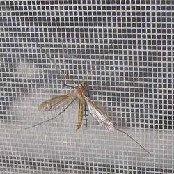 Insect Mesh