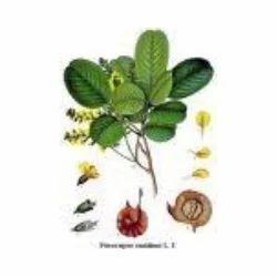 Petrocarpus+Santatinus