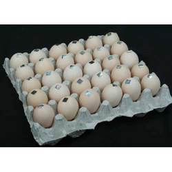 Tamper-Evident Holograms used on Eggs