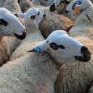 Wool Testing Service