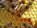 Beekeeping or Aquiculture Consultancy