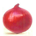 Onion Seeds Nasik Red