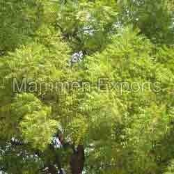 Neem Hair Care Products