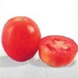Tomato Seed F1