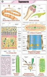 Tapeworm For Zoology Chart