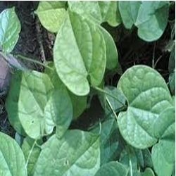 Tinospora cordifolia (Menispermaceae)