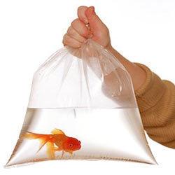 aquarium poly bags