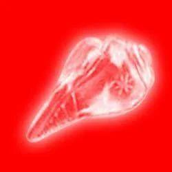 Crystal Shankh