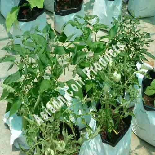 Grow Bags for Tomato