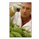 Bio Pesticide Bacteria