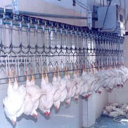 Conveyorised Poultry Dressing & Slaughter Plant