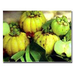 effects of garcinia cambogia with blood pressure and alcohol