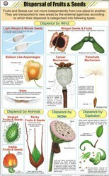 Dispersal Of Fruits & Seeds For Botany Chart
