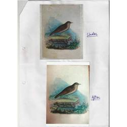 Paper Painting Conservation Service