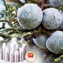 Juniperberry Oil