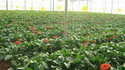 Green House Farming
