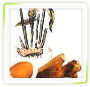 Adrak Extract