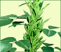 Amar Seeds Private Limited