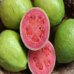 Quality Guava