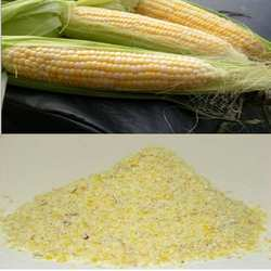 Maize & Maize Meal