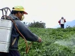 Spraying Insecticides