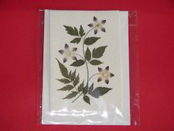 Dried Flower Greeting Cards In Various Designs