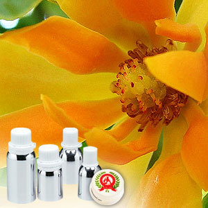 Champaca white 100 pure buy online natural champaca white at champaca white absolute oil mightylinksfo