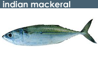 Indian Mackeral Fish