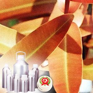 cinnamon online india