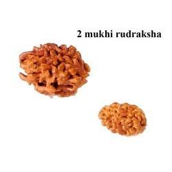 Natural 2 Mukhi Rudraksha Bead