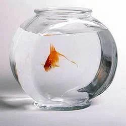 Aquarium Accessories Fish Bowl Manufacturer From Jaipur