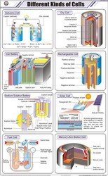 Different Kinds Of Cells For Chemistry Chart